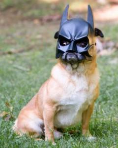 Собака Бэтман