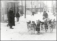 История о Сибирском Хаске Балто