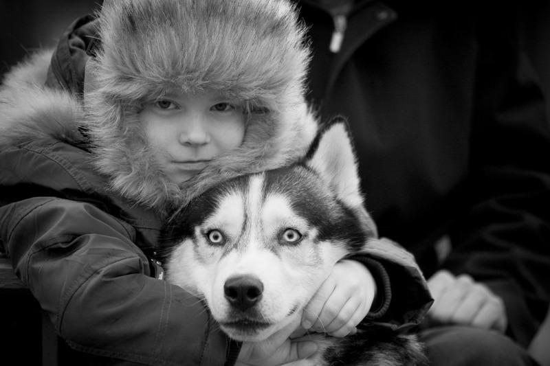 Почему именно Сибирский Хаски