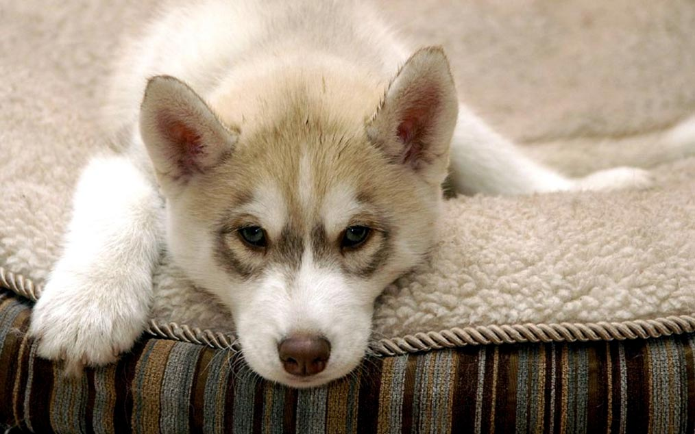 - Image bebe chien ...