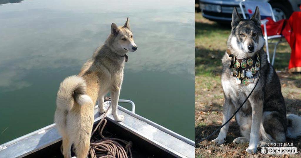 фото всех волков