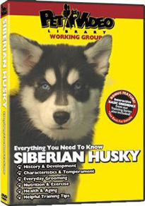 SIBERIAN_HUSKY_DVD_Dog_and_Puppy_Training_Video