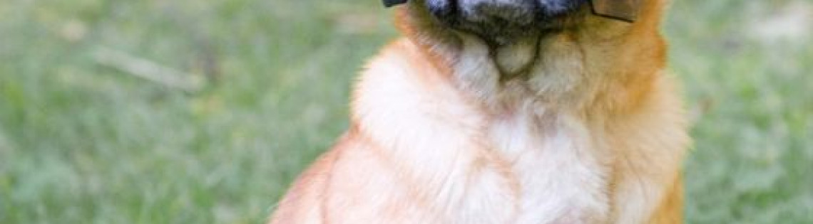 'Собака зовет бетмана