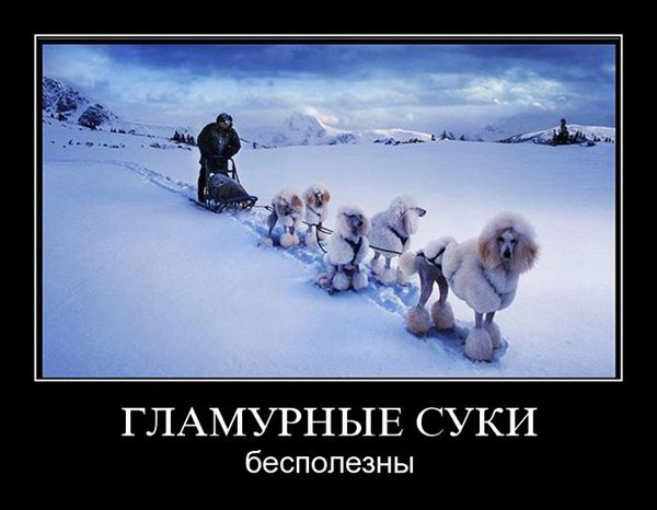Сибирский Хаски Демотиваторы HUSKY