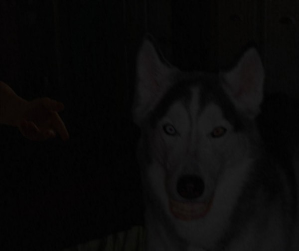 Smile.dog Smile.jpg