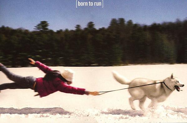 Husky Born to Run